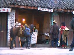 Breakfast on the hoof. Ganzi, Sichuan.
