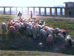Sheepsugarlake