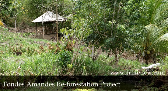 Fondes Amandes Re-forestation Project