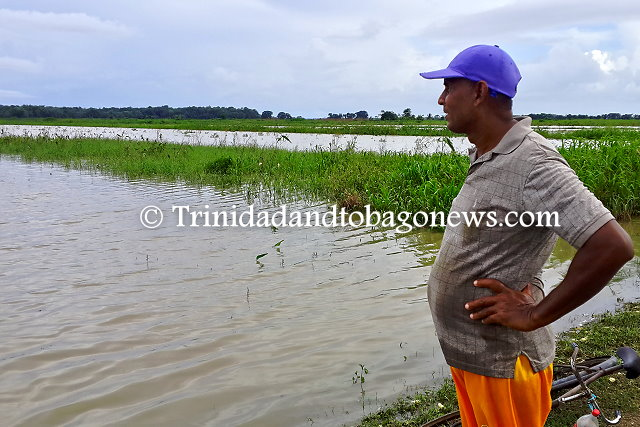 Farmer looks on at the destruction of this agricultural plot due to heavy rains at the Plum Mitan Agricultural Scheme. He estimates 2-3 feet of water covered the area.