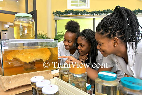 Students from St. Francois Girls College Belmont observe some of the mushrooms on display